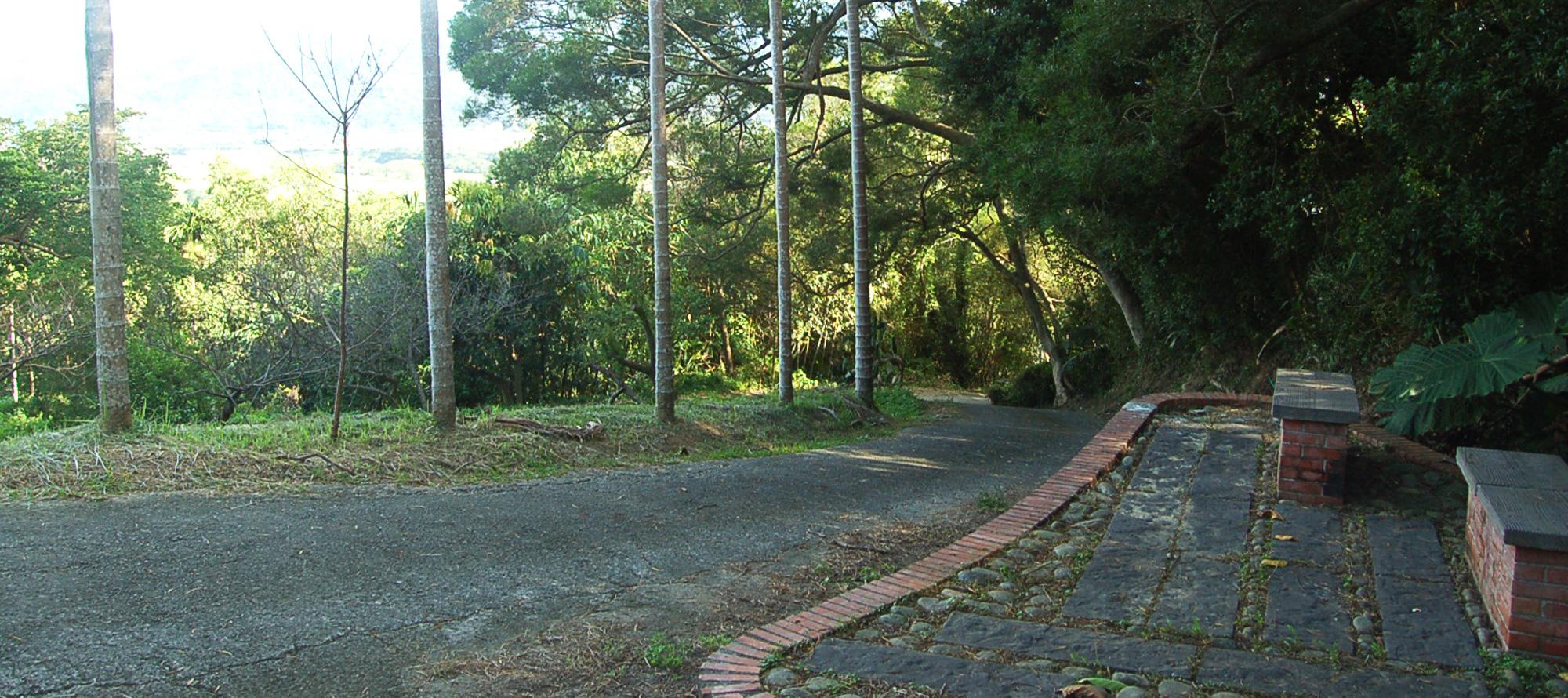 櫻木花の道
